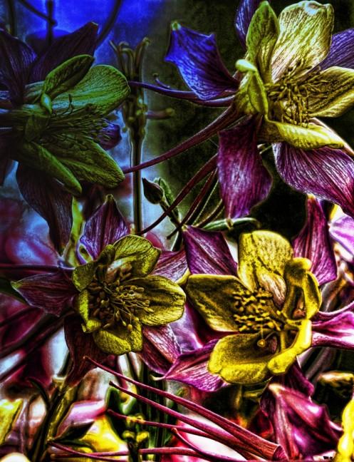 Flowers (Grunge)