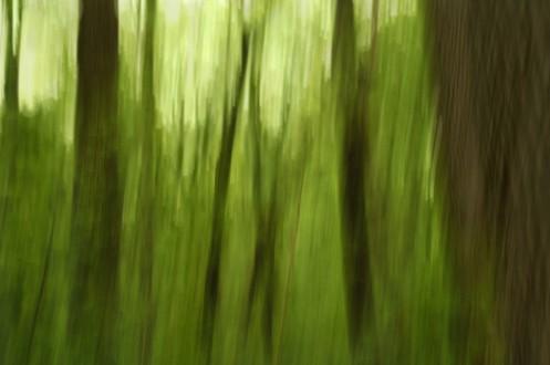 Tree Swipe
