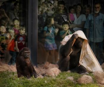Playtime at the Philadelphia Zoo