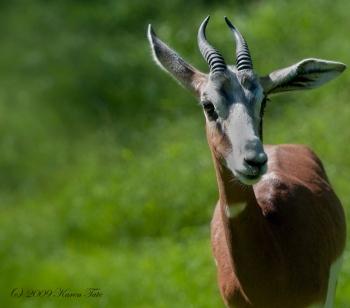 From the Philadelphia Zoo