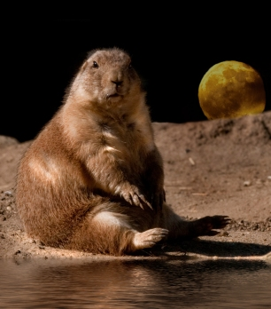 Where in the World is Pete Prairie Dog?