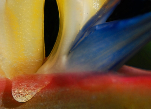 Details of a Bird of Paradise